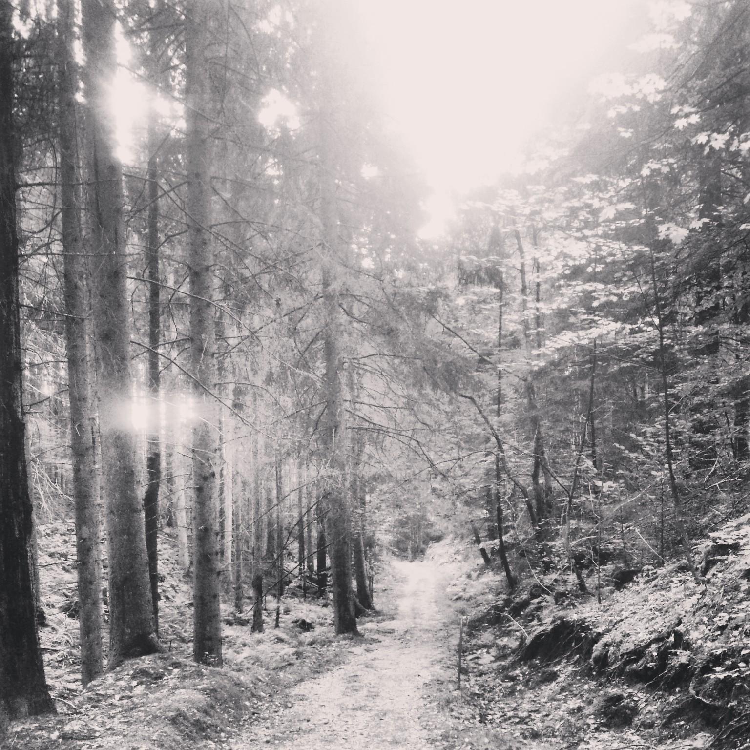 Svartvit bild på en vacker skog